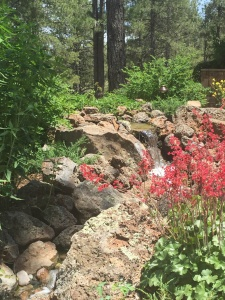 Backyard waterfeature with coral bells