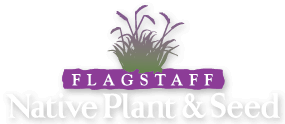 Flagstaff Native Plant and Seed